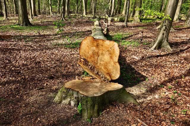 Trädfällning Norrtälje